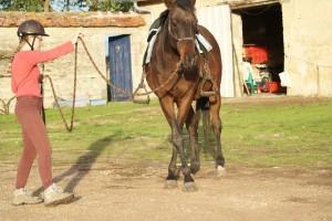 Bouger le cheval en main, avant de monter, permet de faire le point sur un éventuel problème.