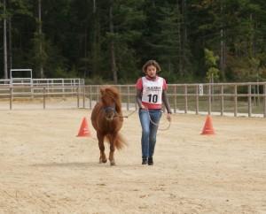 Présentation au trotting lors du contrôle vétérinaire des championnats de France d'endurance en attelage. Il n'y a aucune tension sur la longe et le poney trotte de bon coeur !