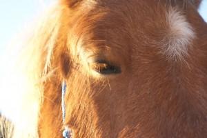 oeil de poney qui cligne