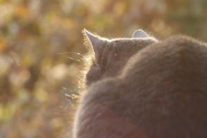 Chat Malo, mon compagnon félin