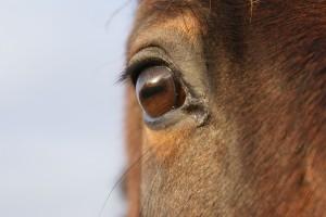 Le regard bienveillant de mon cheval...