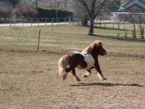 Photo du poney envoyé par le vendeur !