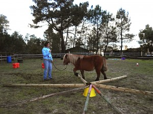 Obstacle en forme d'étoile, que le cheval doit franchir sans toucher les barres.