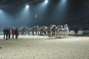 l'attelage de 14 chevaux évoluent sur la piste du salon d'Avignon.