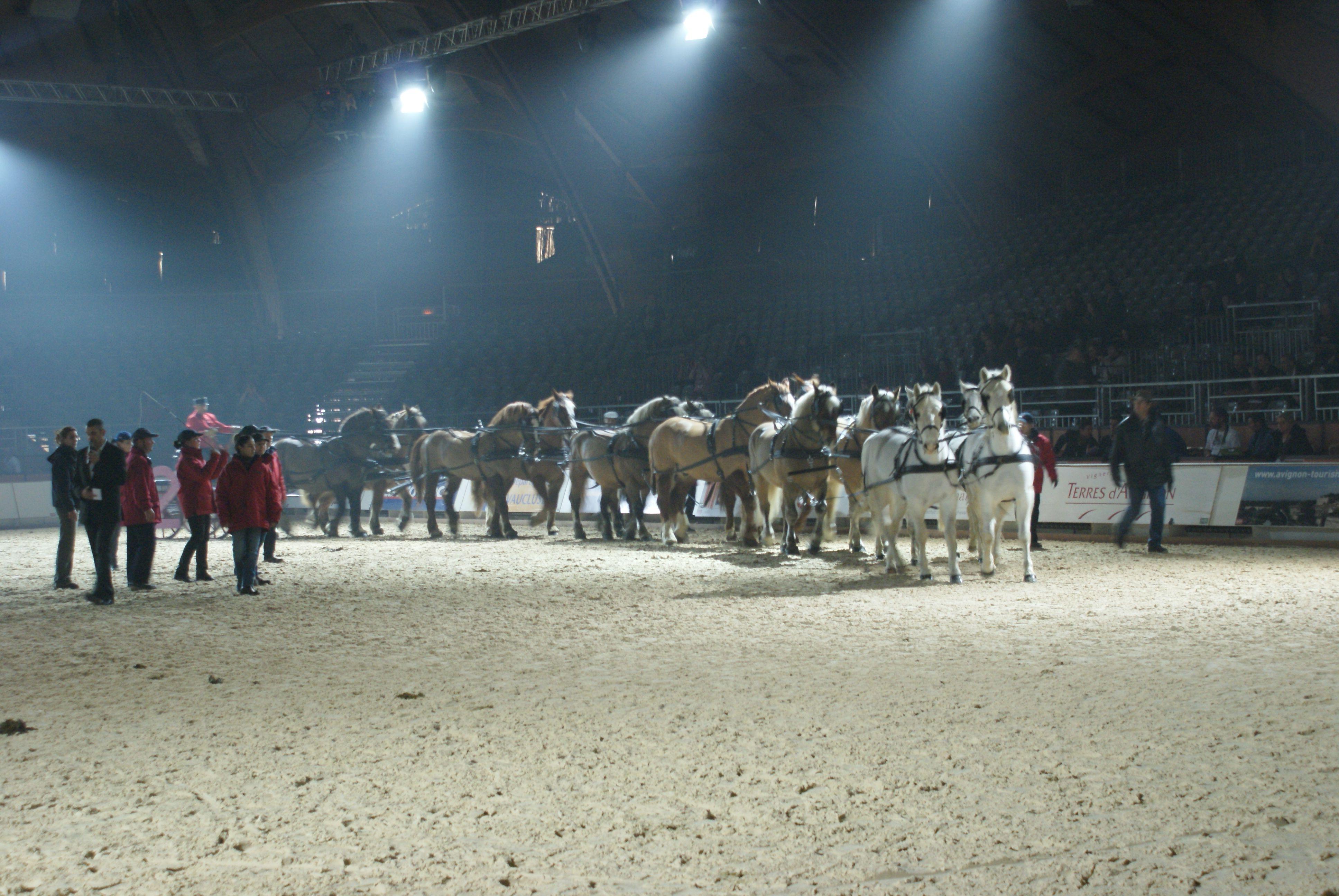 Tous les articles de cheval facile part 16 for Salon du cheval d avignon