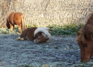 Profiter du gel pour sortir chevaux et poneys plus longtemps !
