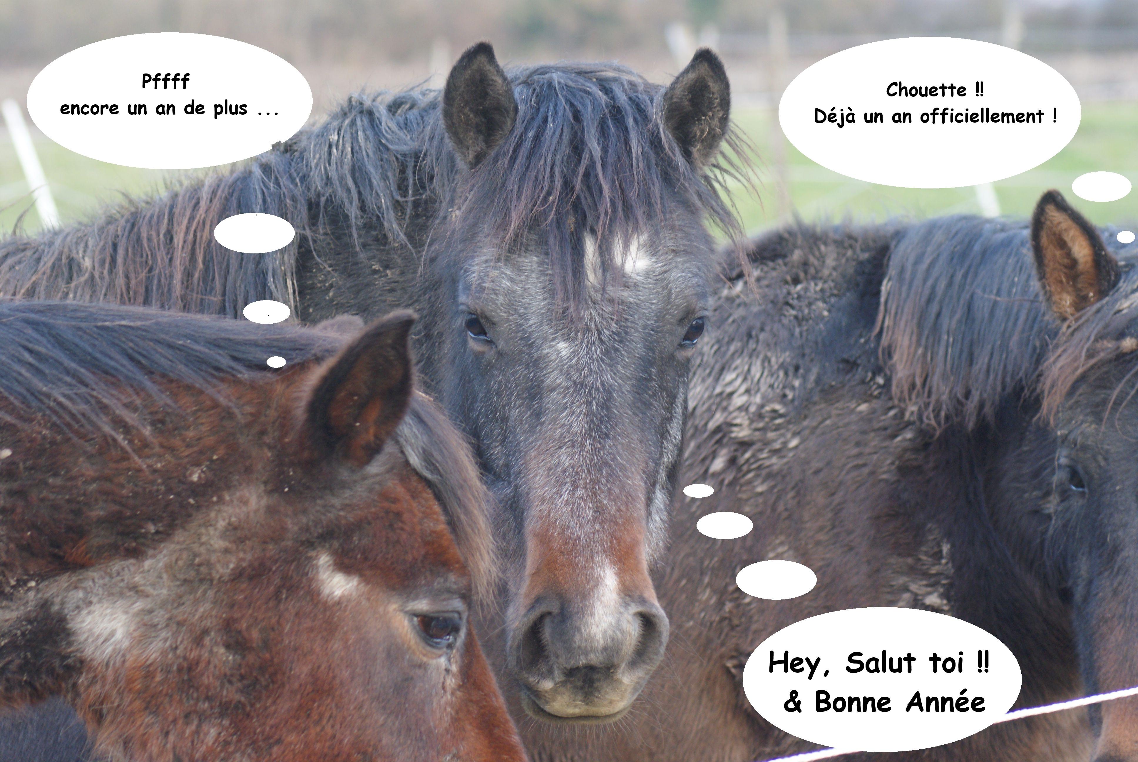 images anniversaire avec cheval