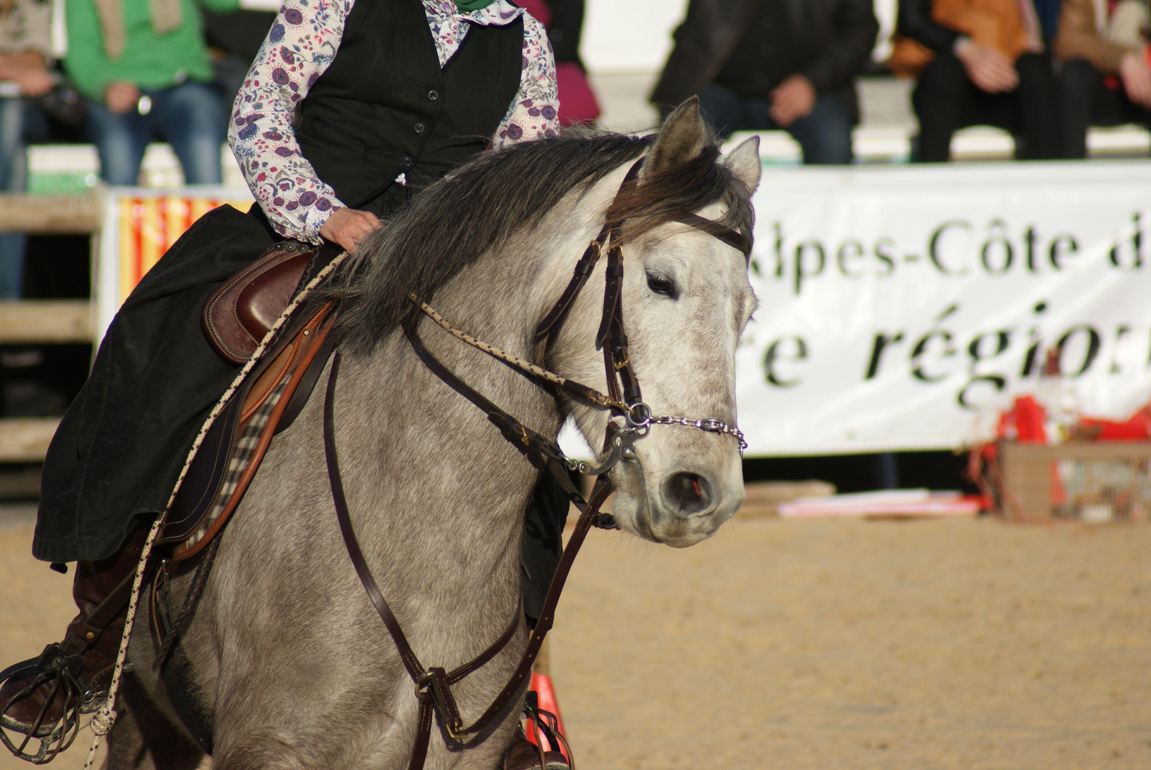 Le salon cheval passion d 39 avignon for Salon du cheval a avignon