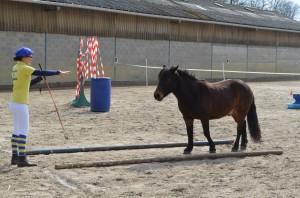 Roméo et Natalia à l'entraînement équifeel