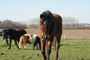 poney marchant vers moi