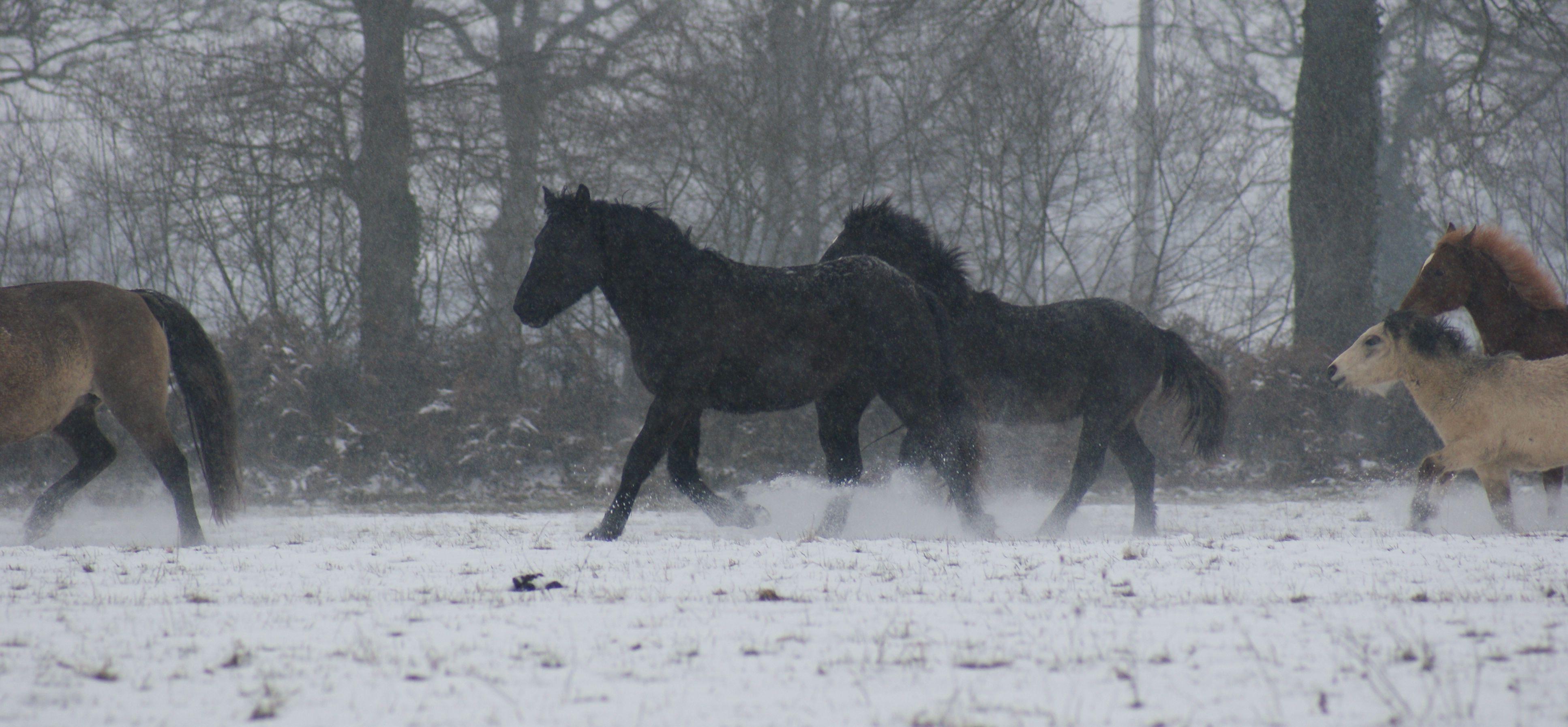 Le silence des chevaux par Pierre Enoff