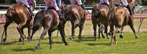 chevaux de courses ferrés