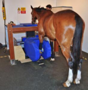 soins vétérinaire à un équidé souffrant de tendinite