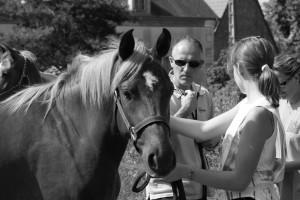visite vétérinaire d'un cheval