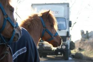 La chemise polaire séchante sur le dos d'un poney