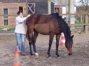 autour du cheval