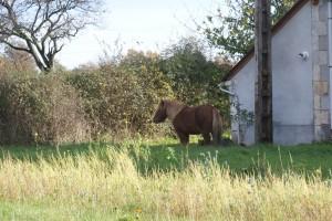 poney au coin de la ferme