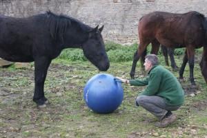 cheval et humain jouant avec un ballon