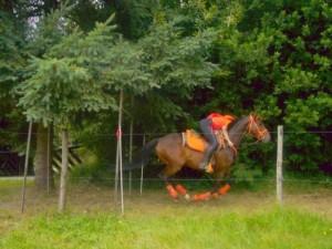 cheval au galop avec sa cavalière. le cheval ne touche pas le sol !
