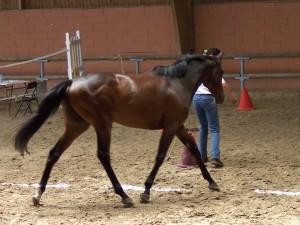 Olivo préfère de loin l'équifeel ou l'horse agility et tout le travail en liberté et en finesse