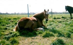 cheval couché au soleil