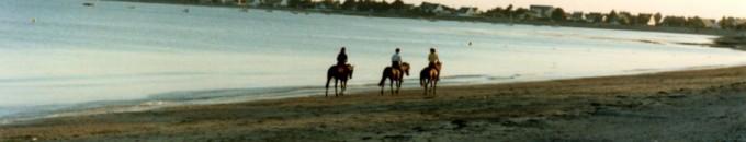 chevaux en bord de mer
