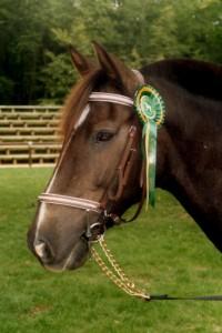 tête de cheval médaillé