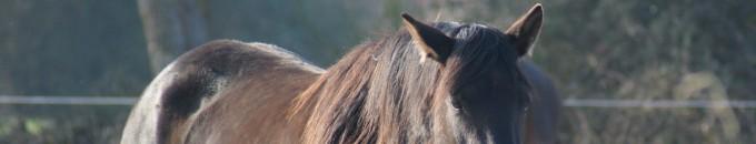 cheval au soleil en contre jour