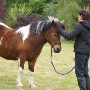 La complicité entre un cheval et son partenaire s'établit d'abord au sol