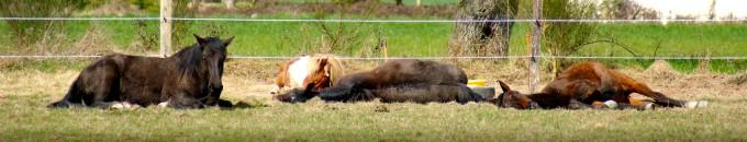 chevaux en lacher prise