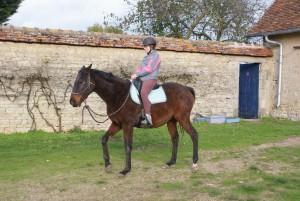 Travail en selle avec un cheval sur les bases de la légèreté dans la cour de la ferme