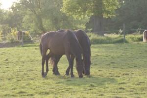 L'herbe printanière se savoure entre amis