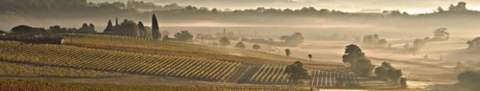 brume sur vignobles