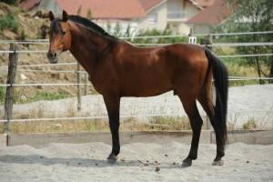 vieux cheval en belle condition physique