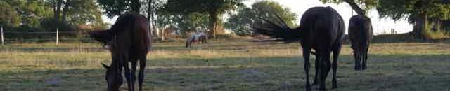 belle vie cheval