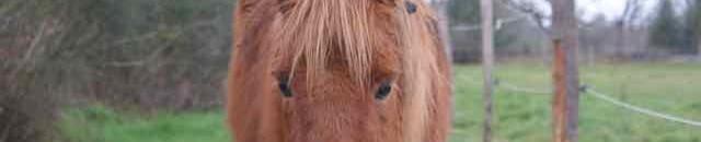 regard de poney