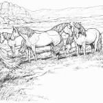 troupeau de mustang