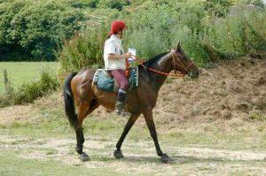 parcours orienation équestre