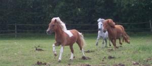 nos amis les poneys