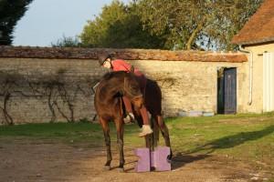 Se mettre en selle, dans le respect du cheval, est encore trop peu enseigné de nos jours.