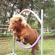 Obstacle d'Horse Agility