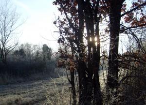 La magie des paysages givrés au petit matin.