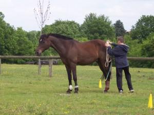 Ce poney de compétition, pourtant très vif, reste attentif au jeune garçon avec qui il a créé un lien particulier.