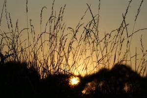 Soleil levant sur la nature qui nous entoure