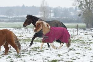 hiver 2012, jeux avec les shetlands !