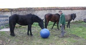 Jouer avec les chevaux à pied, ne serait-ce que quelques minutes !