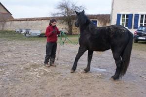S'exprimer gestuelle ment et intérieurement pour se faire comprendre du cheval