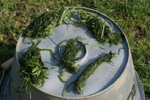 boulettes d'herbe