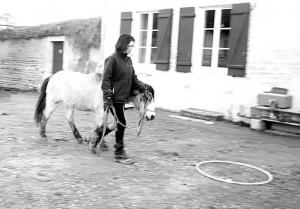 jeu du cerceau en horse agility