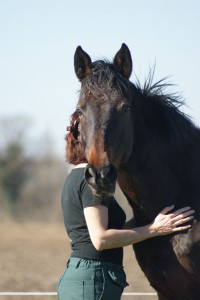 cheval peu attentif à son humain